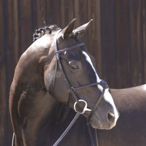 Caldene Wide Plain Snaffle Bridle With Plain Reins – FREE DELIVERY !!!
