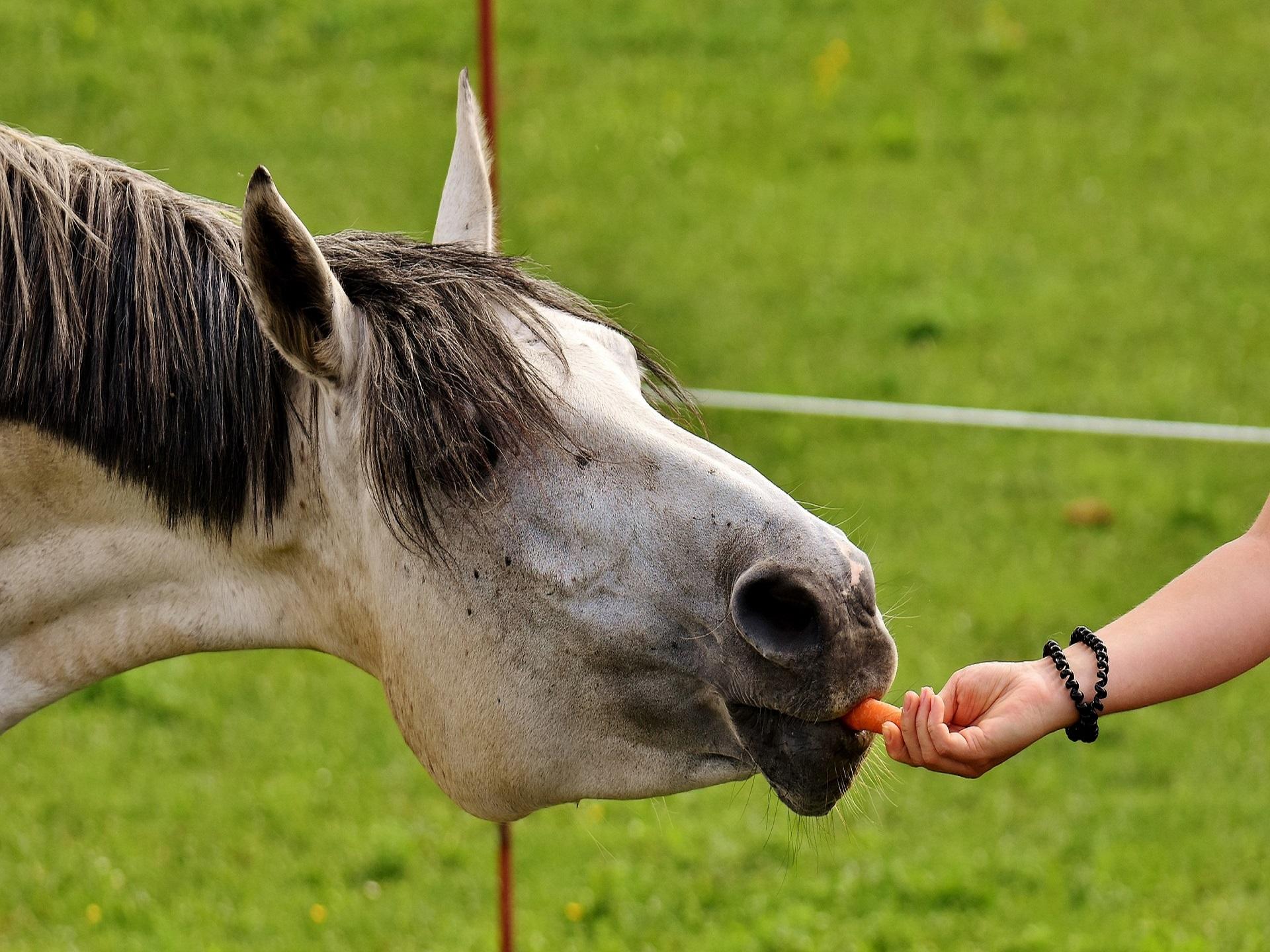 Horse Feed & Tack